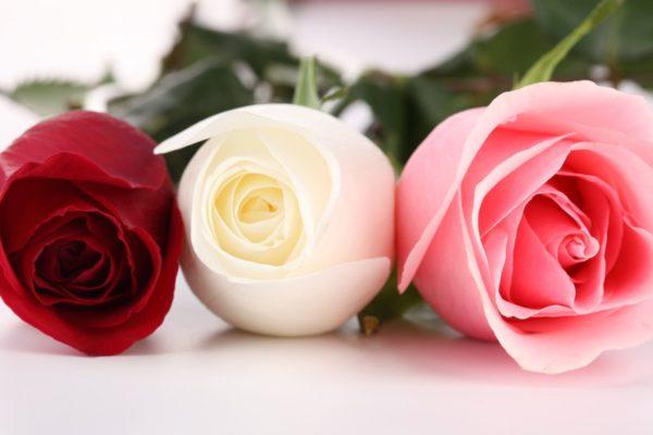 aria ceremonie de la rose ceremonie laique rituel