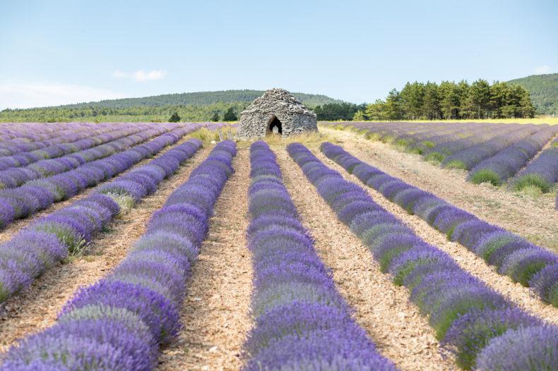 elopement en Provence mariage intime lavandes aria calfopoulos