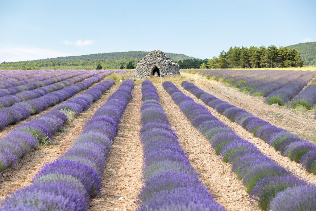 elopement in Provence intimate wedding in lavender fields aria